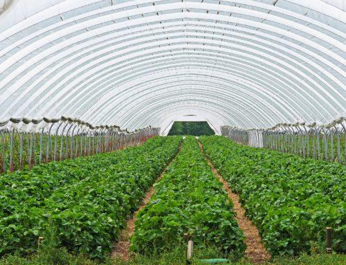 NOUVELLES SUBSTANCES APTES POUR L'AGRICULTURE BIOLOGIQUE